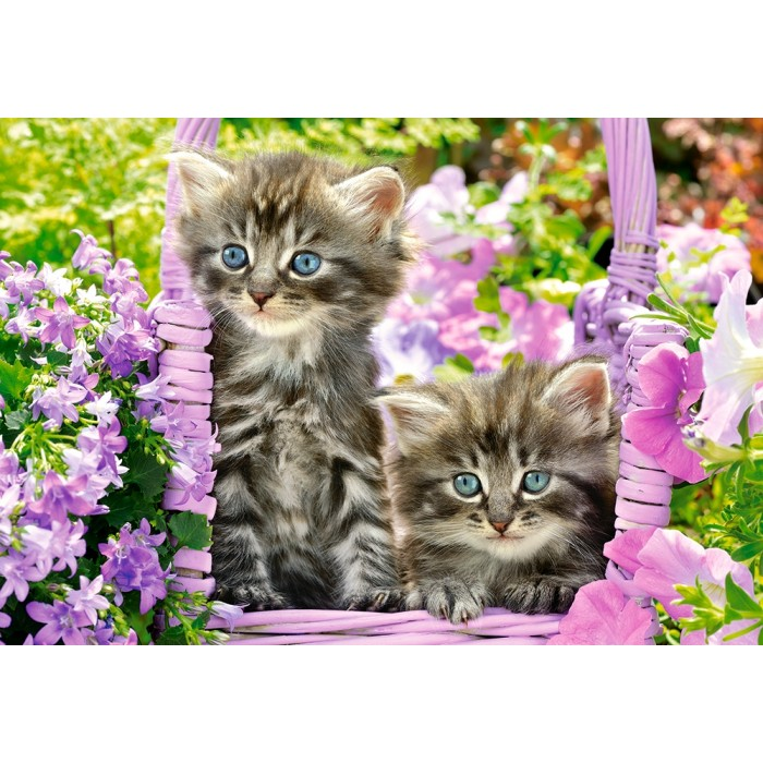 Kittens in Summer Garden