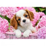 Puzzle  Castorland-52233 Pup in Pink Flowers