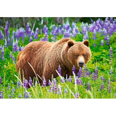 Puzzle Castorland-52677 Bear on the Meadow