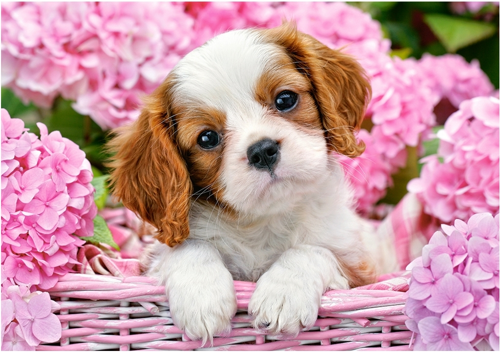 Puzzle Pup In Pink Flowers Castorland-52233 500 Pièces