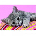 Puzzle  Clementoni-30362 Petit chat calin