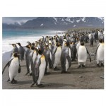 Puzzle  Dino-53283 Penguins
