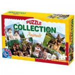 Dtoys-63069-AF-02 4 Puzzles animaux