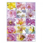 Puzzle  Educa-16302 Collage d'Orchidées