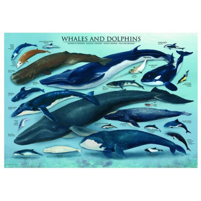 Puzzle Eurographics-6000-0082 Dauphins et Baleines