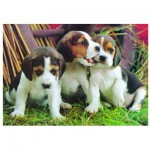 Puzzle  Eurographics-6000-4054 Chiots