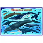 Puzzle  Eurographics-6100-0082 Baleines et Dauphins