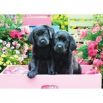 Puzzle  Eurographics-8500-5462 Pièces XXL - Black Labs in Pink Box