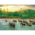 Puzzle   Save our Planet Collection - Forêt Tropicale