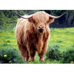 Puzzle  Grafika-Kids-00525 Vache des Highlands