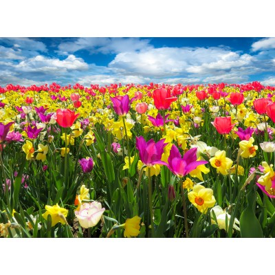 Puzzle Grafika-Kids-00681 Tulipes