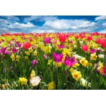 Puzzle  Grafika-Kids-00682 Tulipes