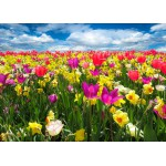 Puzzle  Grafika-Kids-00683 Tulipes