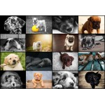 Puzzle  Grafika-01214 Collage - Chiens