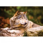 Puzzle  KS-Games-10108 Lonewolf