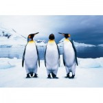 Puzzle  KS-Games-10110 Penguins