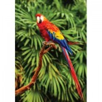 Puzzle   Scarlet Macaw