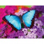 Puzzle   Iridescence - Butterfly