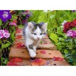 Puzzle  Nathan-87185 Chaton