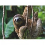 Puzzle  New-York-Puzzle-NG1984 Pièces XXL - Three Toed Sloth