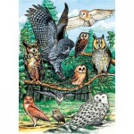 Puzzle   North American Owls