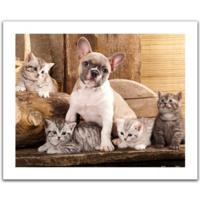 Pintoo-H1567 Puzzle en Plastique - Little Kittens and A Dog