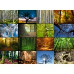 Grafika-Wood-00020 Puzzle en Bois - Collage - Arbres